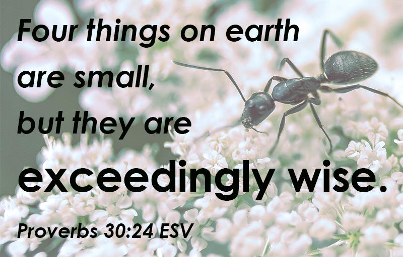 Proverbs 30:24