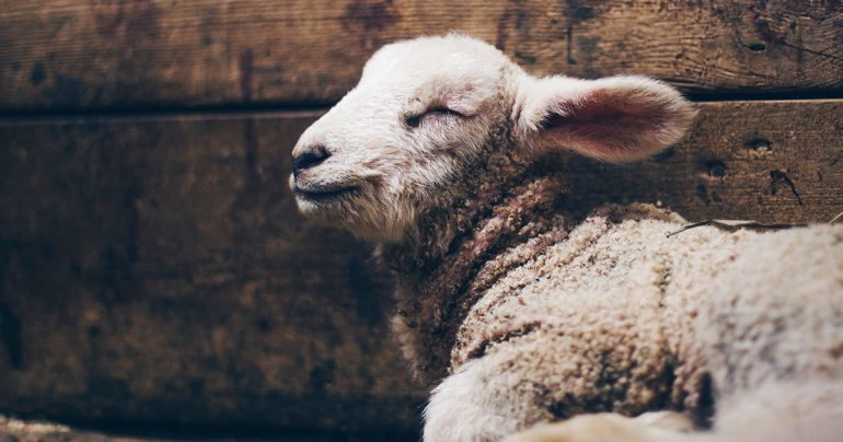 Undone: By a Revelation of the Lamb