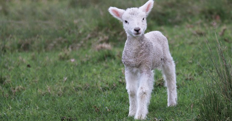 Thy Strong Word - Revelation 14: the Lamb and the 144,000